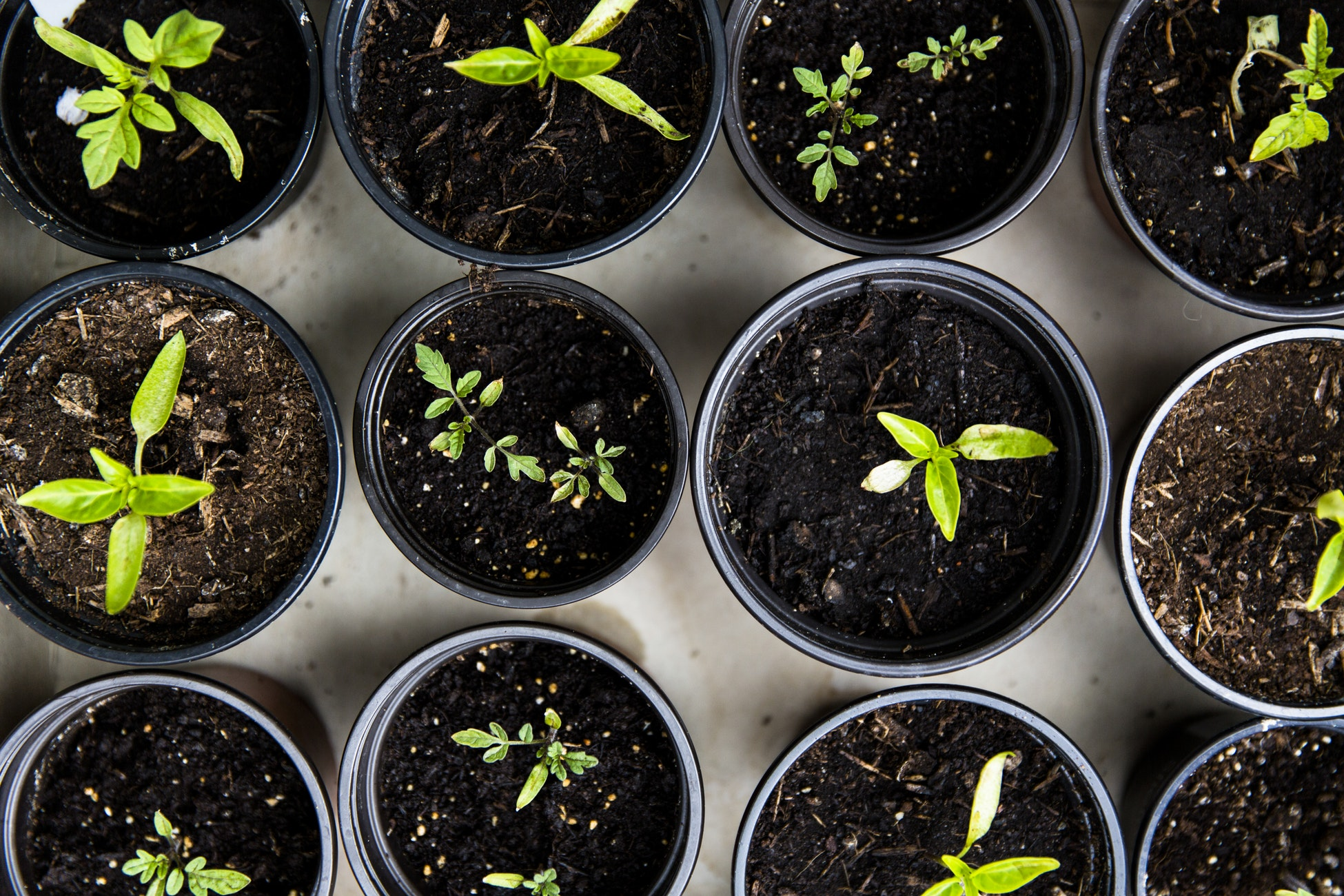 How house plants and home gardens contribute to the environment